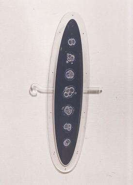 Photographs of bubble-like embryo's presented in a perspex oval.