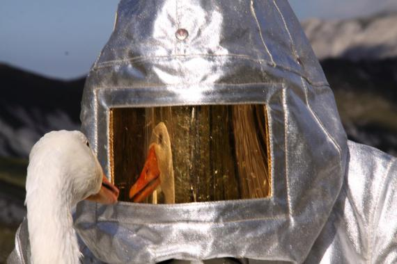 Goose looking into the artist-astronaut's visor
