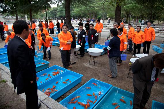 Japanese goldfish breeders competition